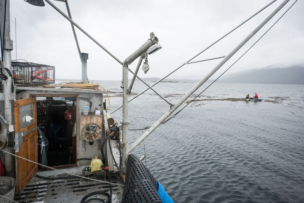 Lia Heifetz and Matthew Kern harvest kelp from a dinghy in Peril Strait, May 20, 2017. F/V Dial West (foreground) provided transportation and support. (Bethany Goodrich)