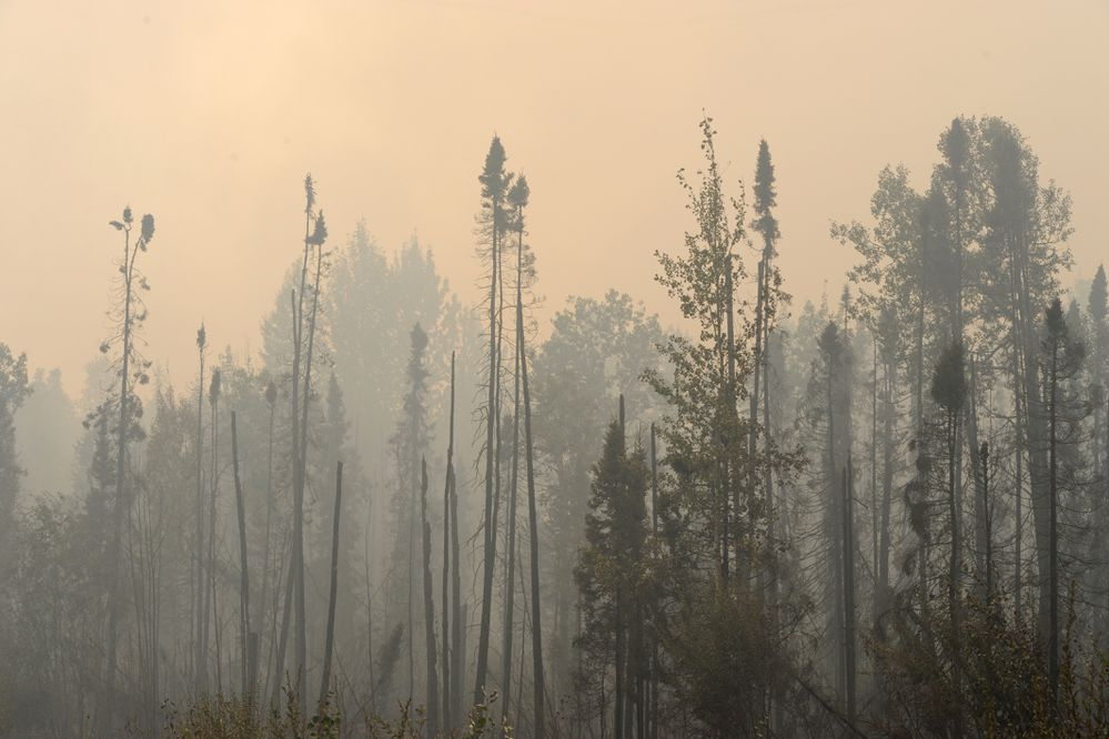 Smoke rises above burnt spruce trees along the Parks Highway on Monday, Aug. 19, 2019. (Bill Roth / ADN)