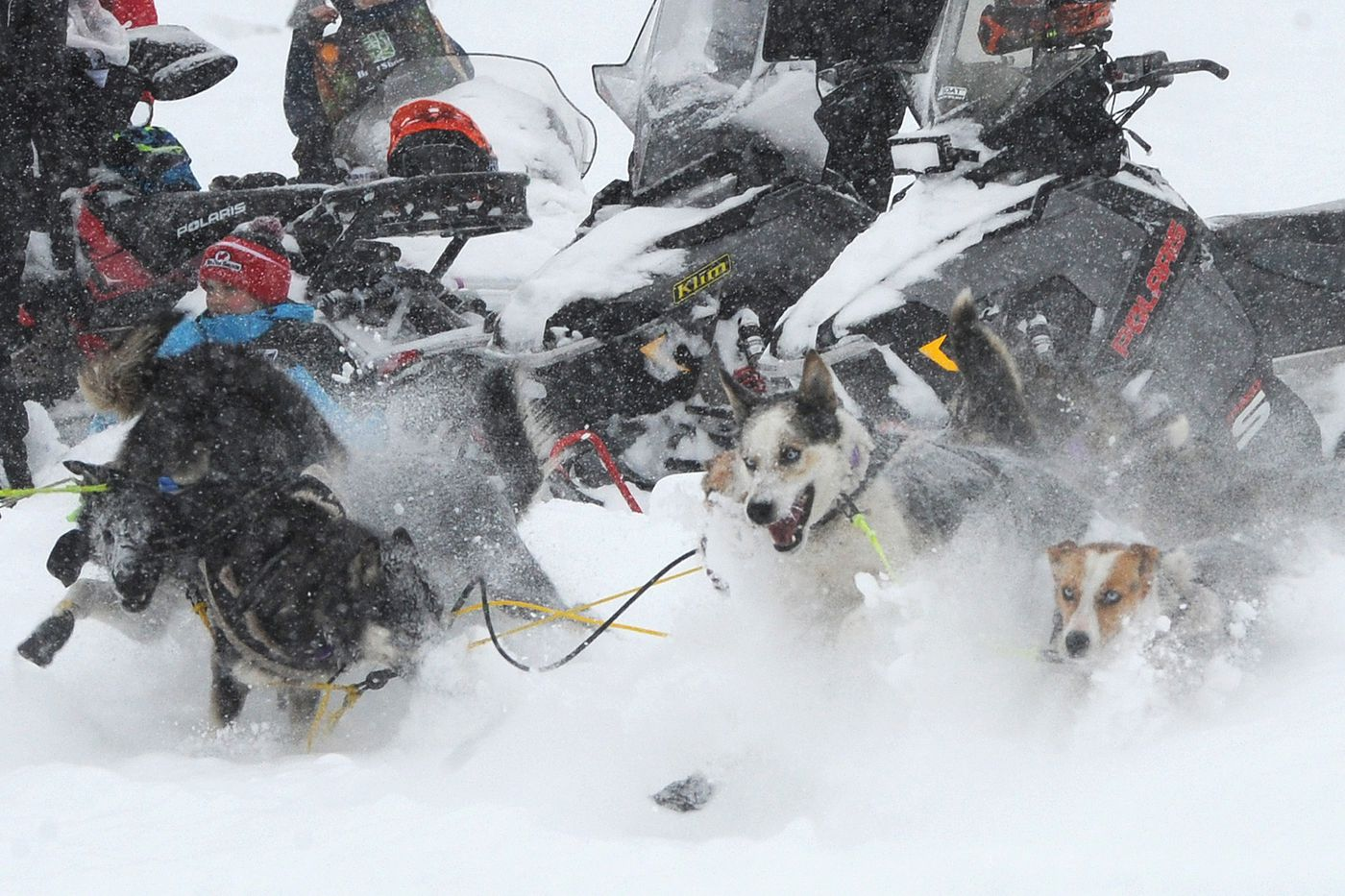 Sled dogs in the team of Iditarod rookie Mille Porsild of Denmark dash back onto the trail while crossing Long Lake. (Bill Roth / ADN)