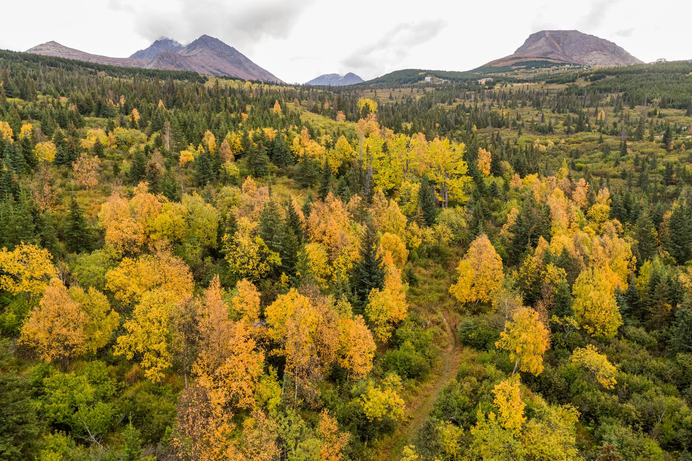 Fall colors decorate trees on the edge of Chugach State Park on Friday, Sept. 25, 2020. (Loren Holmes / ADN)
