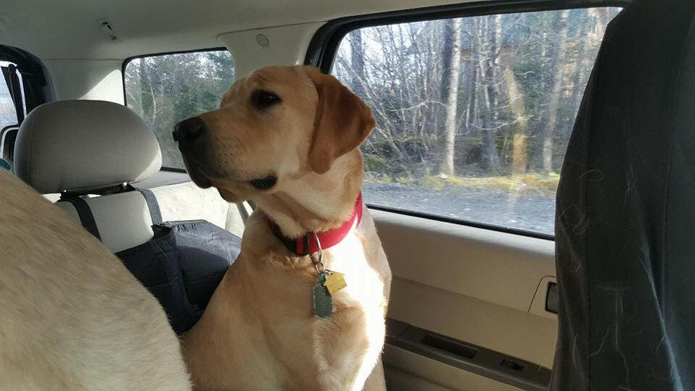 Family members of 12-year-old J.J. Anderson say Scooby-Doo, a dog that was being trained as a service dog for Anderson's deafness and seizures, was struck and killed by a driver in East Anchorage on Sept. 29. (Courtesy Anderson family)