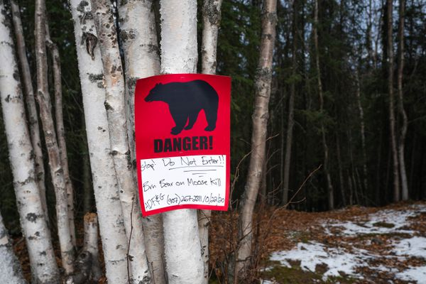 A sign warns people of a brown bear guarding a moose kill off the Homestead Trail near the Abbott Loop Community Park, on Saturday, Oct. 24, 2020. (Loren Holmes / ADN)
