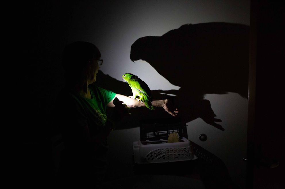 Using the flashlight on her cellphone, Patty Ohlson checks on her pet bird Bonnie at the Lawton Chiles High School shelter in Tallahassee, Florida. Photo by Kevin D. Liles for The Washington Post