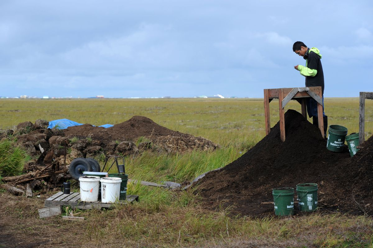 With Quinhagak background, Roy Mark pauses from screening to examine an item at the Nunalleq archaeological site on Tuesday, August 26, 2014, in the Yukon-Kuskokwim Delta region of Southwest Alaska. (Erik Hill / Anchorage Daily News archive)