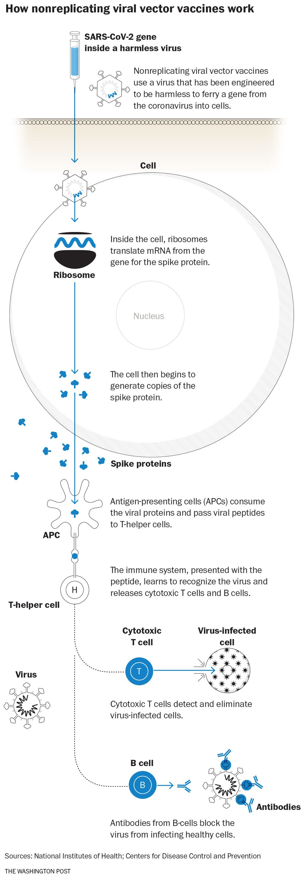 How non-replicating viral vector vaccines work
