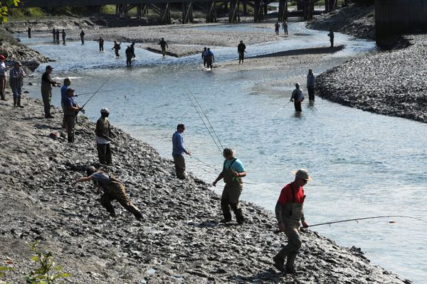 Anglers line the muddy banks of Ship Creek as they fish for coho (silver) salmon that are returning in good numbers early in the run on Thursday, July 25, 2019. (Bill Roth / ADN)