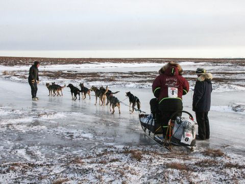 Musher Aaron Burmeister, 42, leaves the Bethel checkpoint the afternoon of Saturday, Jan. 20, 2018, in the Kuskokwim 300 sled dog race. (Lisa Demer / ADN)