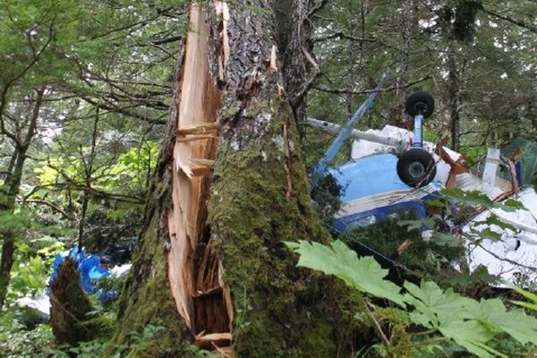 A Wings of Alaska Cessna 207A crashed into a spruce tree near Juneau on July 17, 2015. Pilot Fariah Peterson, 45, died in the crash; all four passengers were seriously injured. (From NTSB)