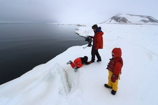 Open water absorbs sunlight, leading to dark skies over the polynya. The family took a trip exploring the Seward peninsula sea ice during the spring of 2015.