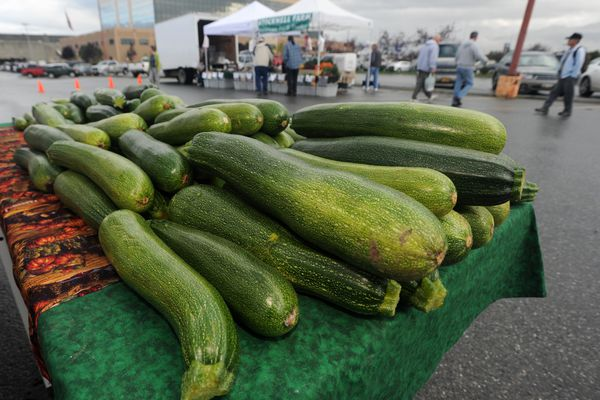 A table laden with zucchini is presented by Glacier Valley Farm of Palmer, one of three vendors at the South Anchorage Farmers Market on Wednesday, September 4, 2013, in front of the Dimond Hotel. (Erik Hill / ADN archive 2013)