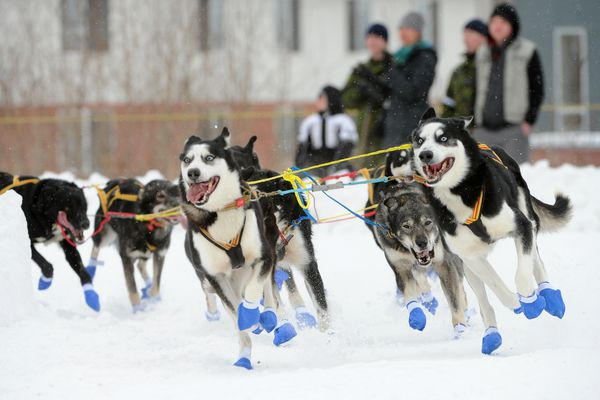 Lars Monsen, from Skiptvet, Norway, rounds the Cordova and 4th Ave corner during the 2018 Iditarod Trail Sled Dog Race ceremonial start in downtown Anchorage, AK on Saturday, March 3, 2018. (Bob Hallinen / ADN)