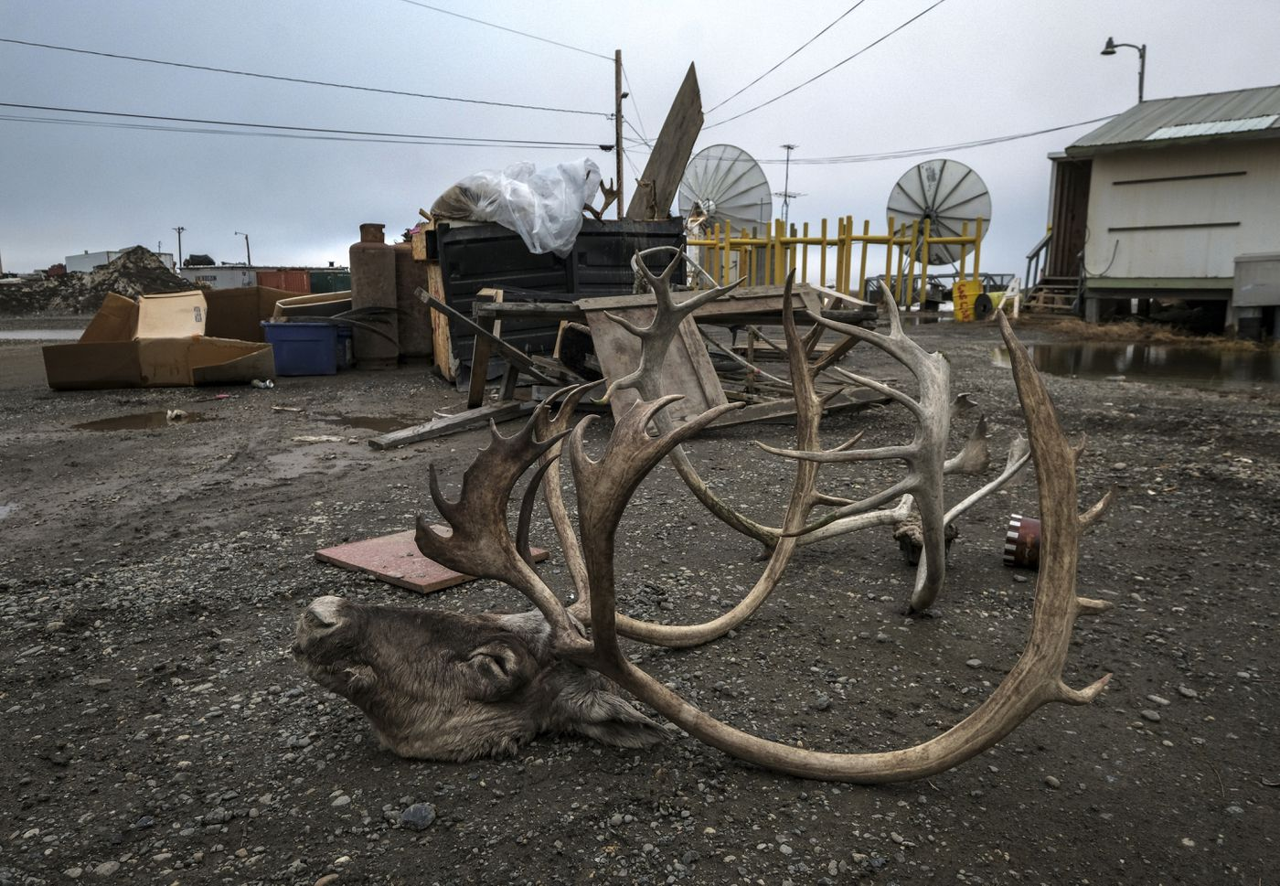 Remains of a caribou outside a youth center in Nuiqsut. (Washington Post photo by Bonnie Jo Mount)