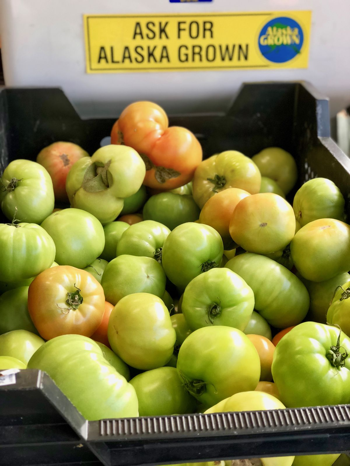 Green tomatoes at Bell's Nursery in Anchorage, June 12, 2018. (Photo by Kim Sunée)