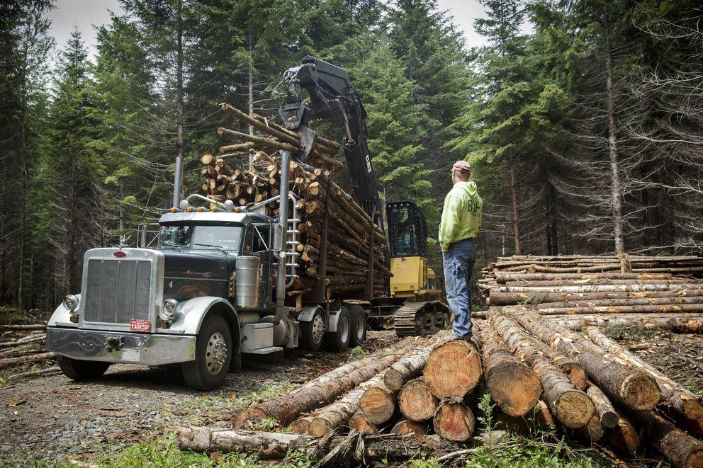Workers thin fir trees at Cedar Row Farm near Portland, Ore., June 24, 2016. (Leah Nash/The New York Times)