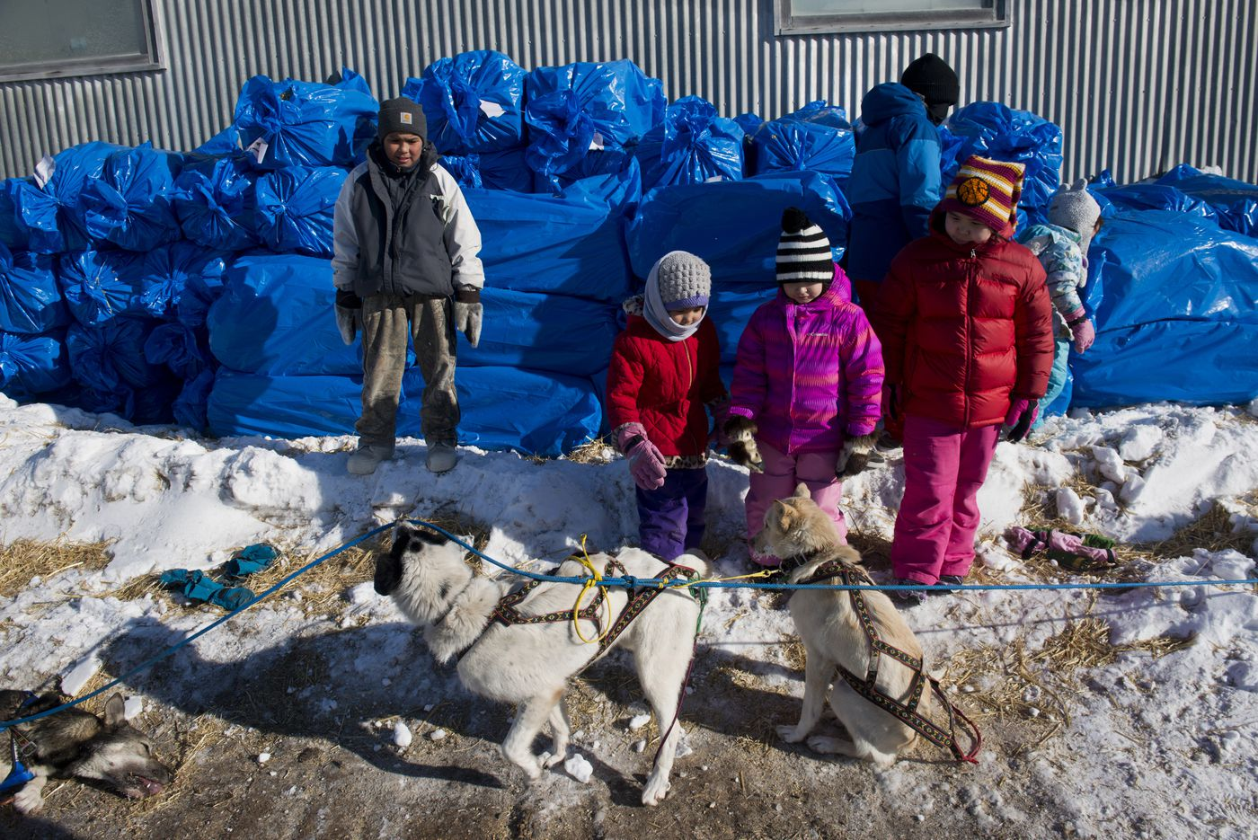 Children in Shaktoolik visit Wade Marrs' dogs. Iditarod mushers battled a windstorm coming in and out of the Shaktoolik on Sunday, March 13, 2016.