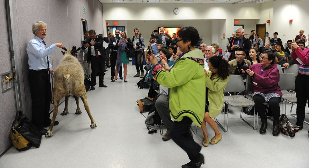 Greg Finstad, project manager of the Reindeer Program at UAF, brought a reindeer into the session and it promptly relieved itself. (Bob Hallinen / Alaska Dispatch News)