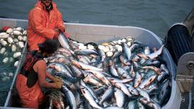 Bristol Bay has a bumper crop of sockeye, but kings and chums aren't filling rivers statewide