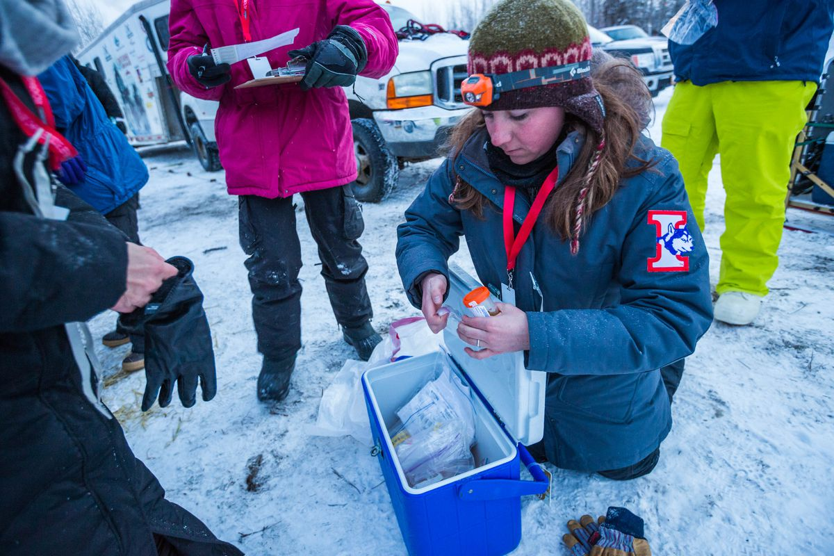 Volunteer Melissa Thompson collects urine samples from the canine athletes before the start of the Iditarod Trail Sled Dog Race on Monday, March 9, 2015, in Fairbanks.(Loren Holmes / Alaska Dispatch News)