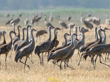 A warm fall lingers in Alaska's Interior, which is good news for blueberry pickers and sandhill crane hunters