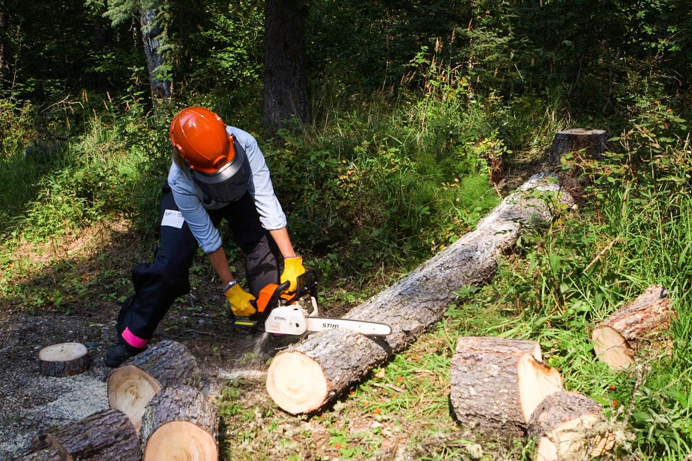 A Becoming an Outdoors Woman student uses a chainsaw for the first time Aug. 8, 2015, during an immersion weekend at Lost Lake Boyscout Camp. Becoming an Outdoors Woman is an introductory skills program run by Alaska Fish and Game to teach woman and men hunting, fishing and other outdoor sports in a supportive environment.
