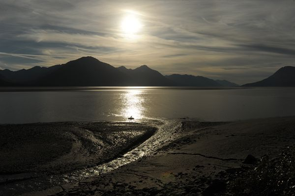 A surfer walks along the silty water of Turnagain Arm on Sunday, one of a few to catch a ride on the bore tide. (Bob Hallinen / ADN)