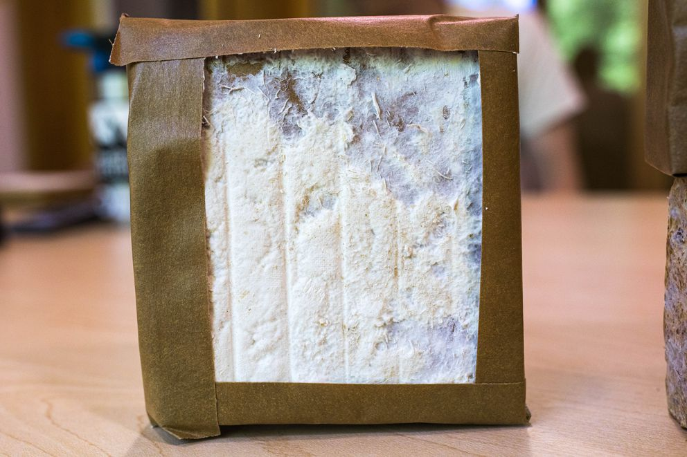 White fungi coats a sample of insulation in Dr. Philippe Amstislavski's lab at the University of Alaska Anchorage on June 21, 2019. Amstislavski is a co-founder of Rhizoform, a biomaterials company, which is making insulation made from fungi. (Loren Holmes / ADN)