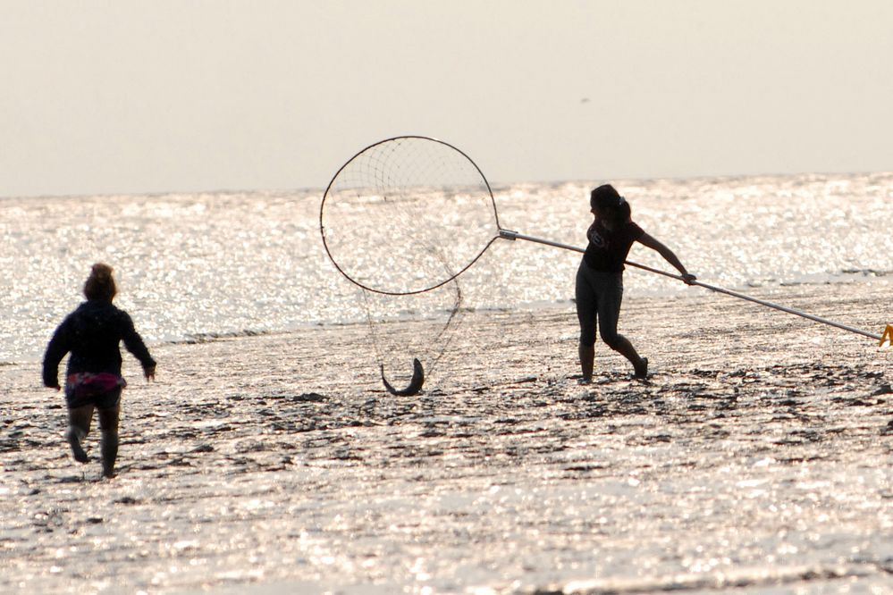 People dipnet for sockeye salmon at the mouth of the Kenai River on Wednesday, July 10, 2019. (Matt Tunseth / ADN)