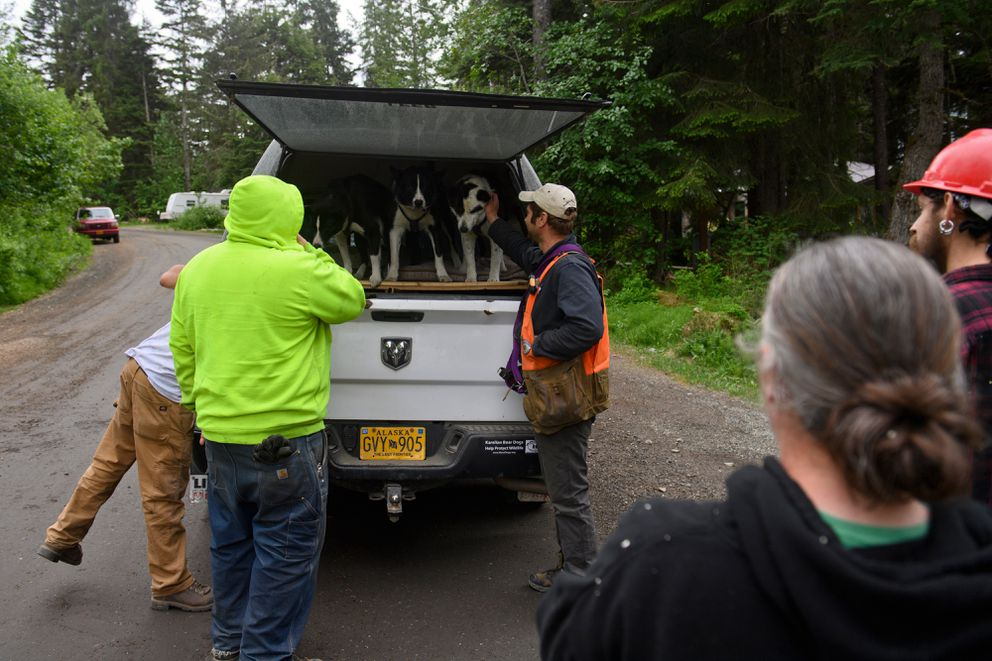 Nils Pedersen introduces his dogs to people in Girdwood on June 16, 2021. (Marc Lester / ADN)