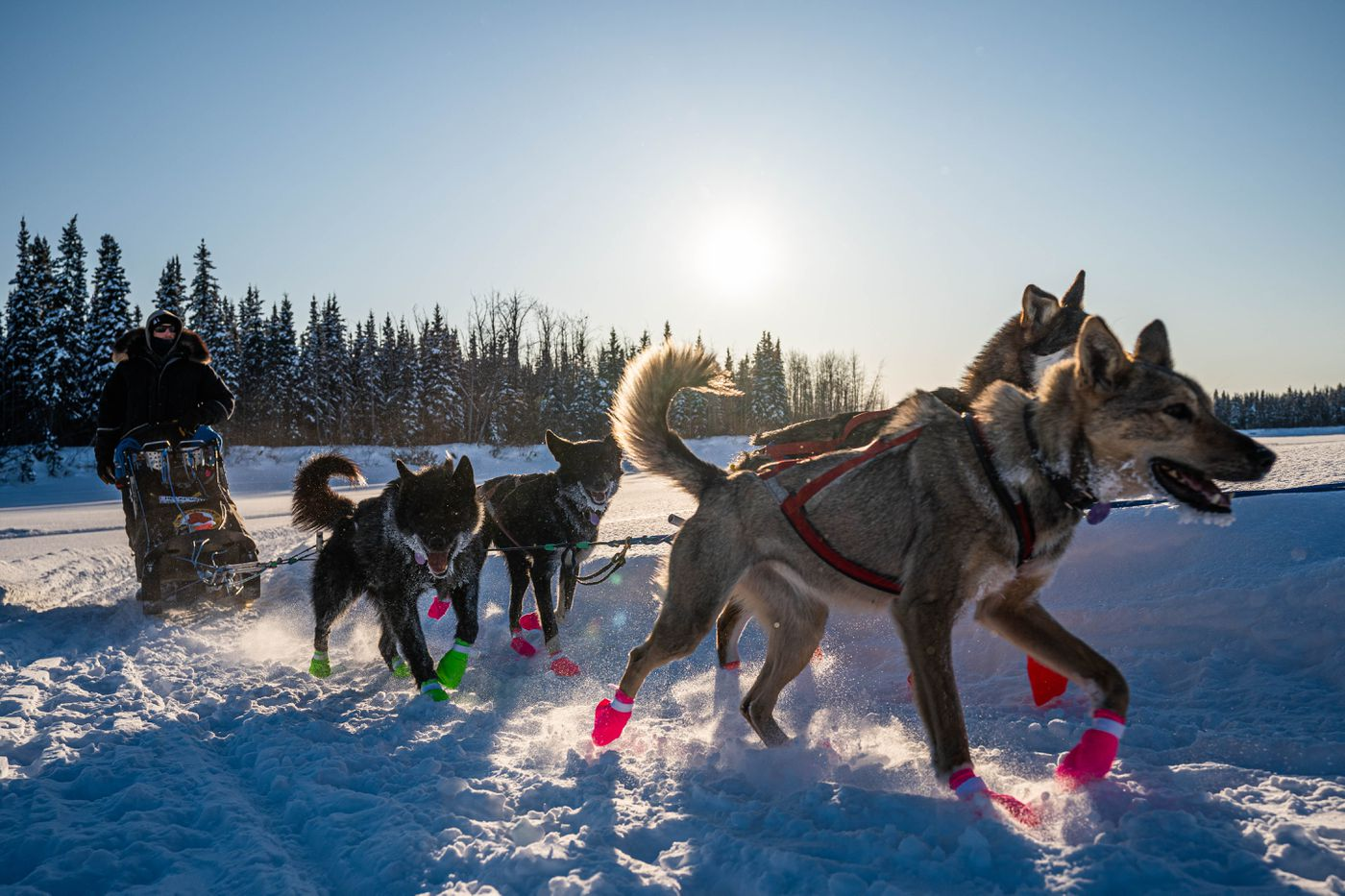 Jeff Deeter arrives in Nikolai on Tuesday, March 10, 2020 during the Iditarod Trail Sled Dog Race. (Loren Holmes / ADN)