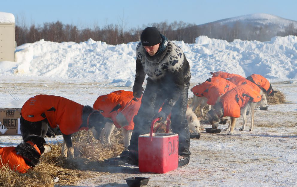 Dallas Seavey's dogs ate hungrily from a stand as Seavey declared he'd be taking his 8-hour rest in the McGrath checkpoint on Friday. (Zachariah Hughes/for ADN)