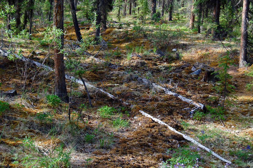 The Kernwood cabin site after restoration (Photo from Jean Aspen and Tom Irons)