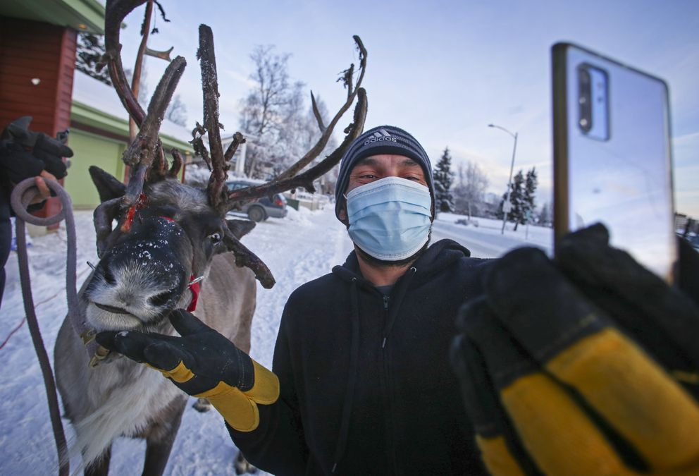 Star the Reindeer chomps on a carrot stick Nick Juarez fed him as he takes a selfie with Star. Juarez was helping deliver the last pallet of ice for a Christmas ice sculpture. (Emily Mesner / ADN)