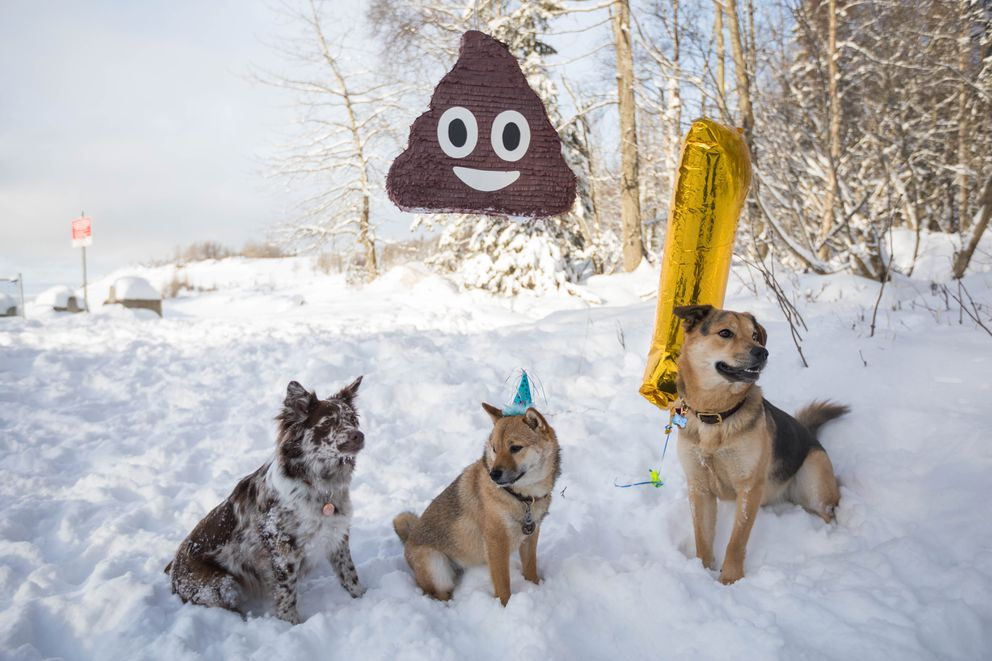 Cricket, a 1-year-old shiba inu, center, poses under a poop emoji pinata with his friends Denali, left, and Hank on Saturday at Kincaid Park during Cricket's birthday party. (Loren Holmes / ADN)