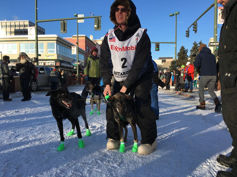 Ryan Redington, grandson of Iditarod co-founder Joe Redington Sr., stops to bootie his lead dog on his way to the start line of the ceremonial start in Anchorage on Saturday. (Bob Hallinen / Alaska Dispatch News)