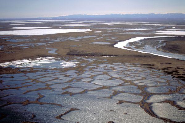 The coastal plain of the Arctic National Wildlife Refuge, June 2004. (Photo by U.S. Fish & Wildlife Service)