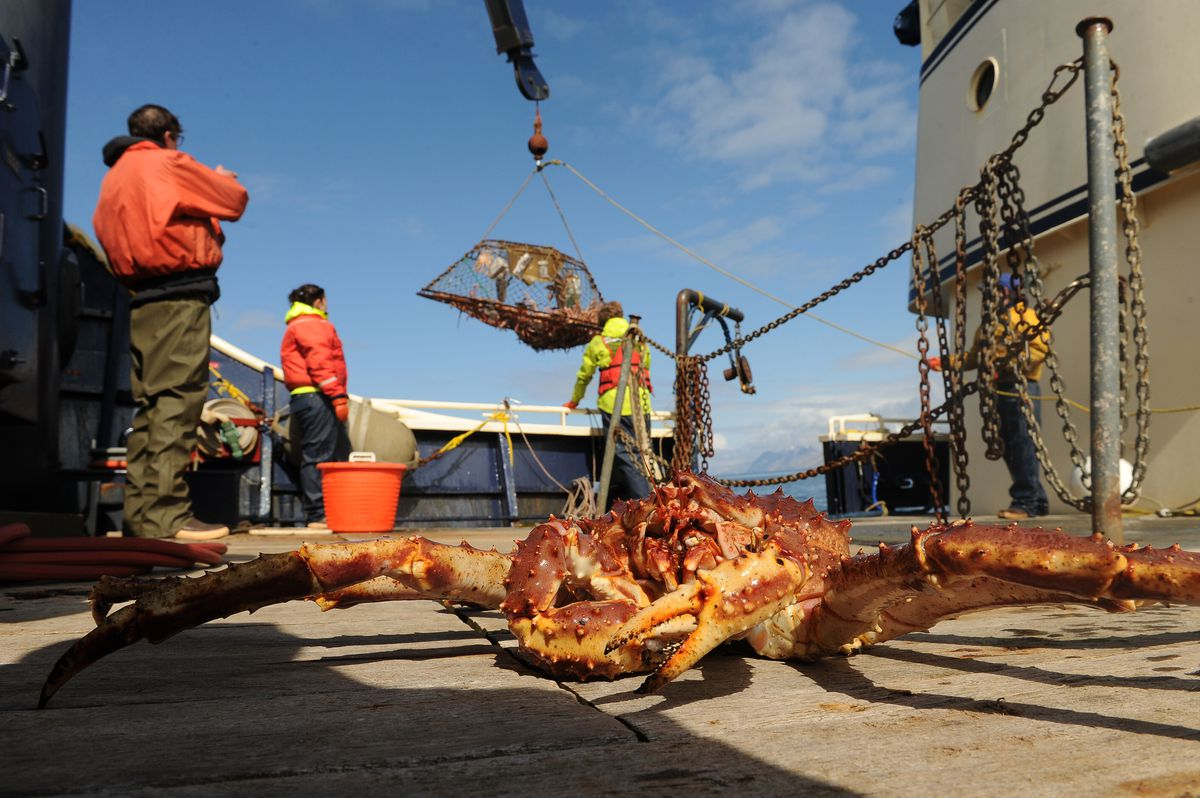 the economics behind alaskan king crab Read the king crab imported from russia is it really bad to buy discussion from the chowhound general discussion, crab food community join the discussion today.