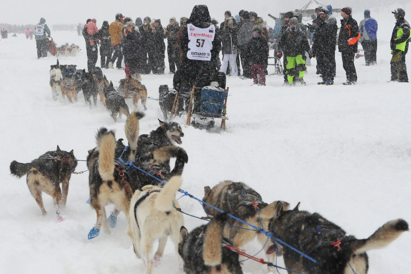 The last three dog teams negotiate spectators on Long Lake during the restart of the Iditarod Trail Sled Dog Race in Willow on Sunday, March 8, 2020. (Bill Roth / ADN)