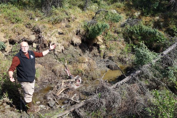 Permafrost expert Tom Douglas in a recent ground-collapse feature, in which he found a young, dead moose. (Photo by Ned Rozell)