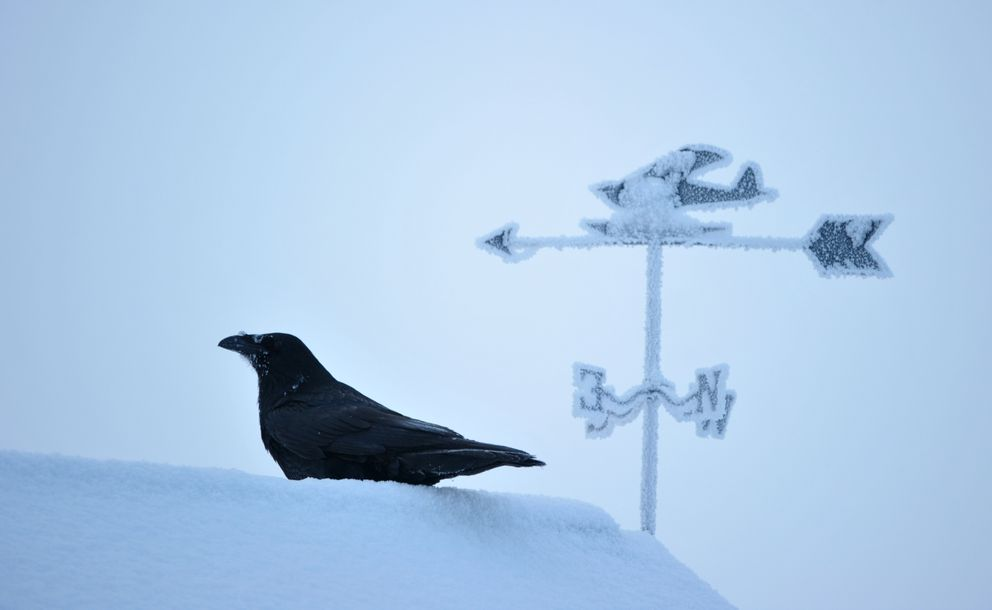A raven perches on a roofline with a weathervane at Lake Hood Float Plane Base in Anchorage, Alaska, on Wednesday, December 21, 2016. (Bob Hallinen / Alaska Dispatch News)