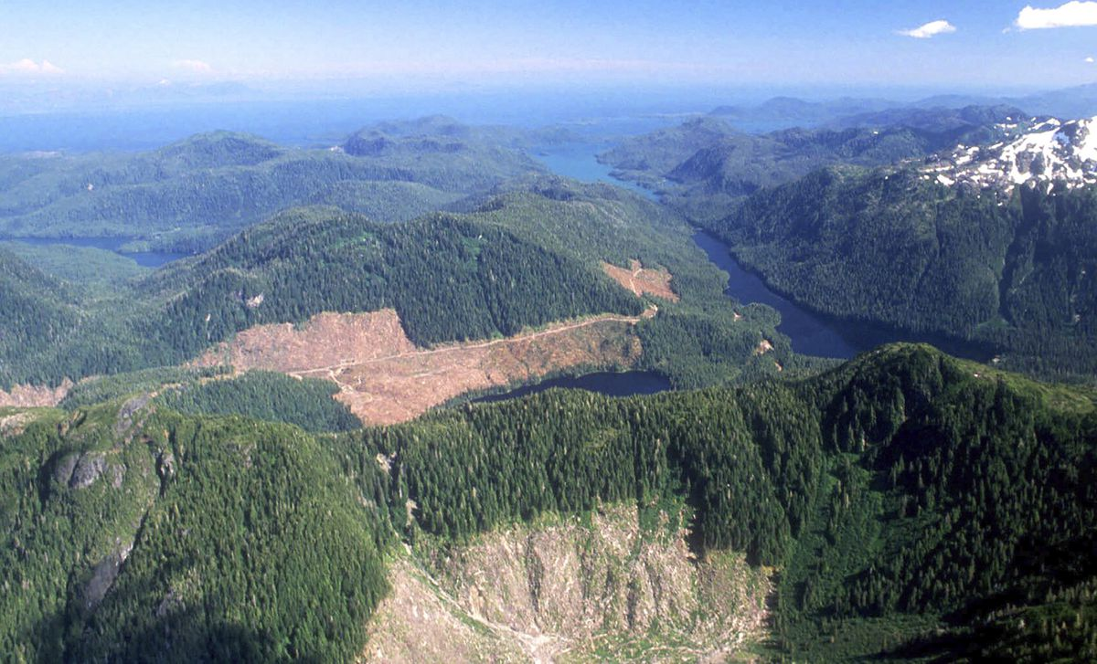 FILE - This 1990 aerial file photo, shows a section of the Tongass National Forest in Alaska that has patches of bare land where clear-cutting has occurred. The U.S. Forest Service announced plans Wednesday, Oct. 28, 2020, to lift restrictions on road building and logging in most of Tongass National Forest, a largely pristine rainforest in Southeast Alaska that provides habitat for wolves, bears and salmon. Conservation groups vowed to fight the decision. (Hall Anderson/Ketchikan Daily News via AP, File)