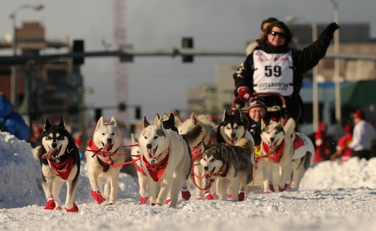 Karen Ramstead, of Perryvale, Alberta, Canada, waves to the crowd during the ceremonial start of the 2014 Iditarod Sled Dog Race on Fourth Avenue in downtown Anchorage on Saturday, March 1, 2014. (Bob Hallinen / ADN Archive 2014)
