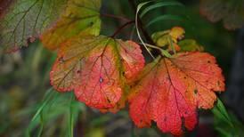 Autumn colors spice up a drive on the Kenai Peninsula