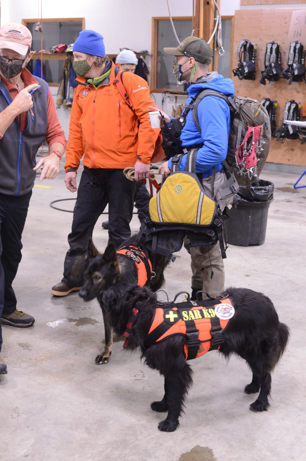 Canine search and rescue teams from Haines and Juneau prepare on Saturday morning, Dec. 5, 2020, for another day of searching for David Simmons and Jenae Larson, the two people missing after a major landslide in Haines. The dogs are Otis (near) and Hera (far). (James Brooks / ADN)