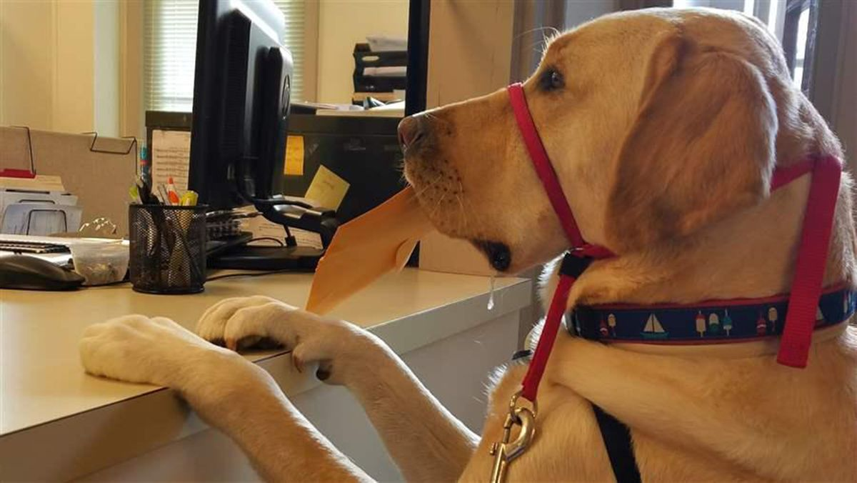 Tightening the leash on fake service dogs anchorage daily news 1betcityfo Images