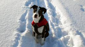 Sharing the trail: Iditarod dog Nash and our Jack didn't deserve to die