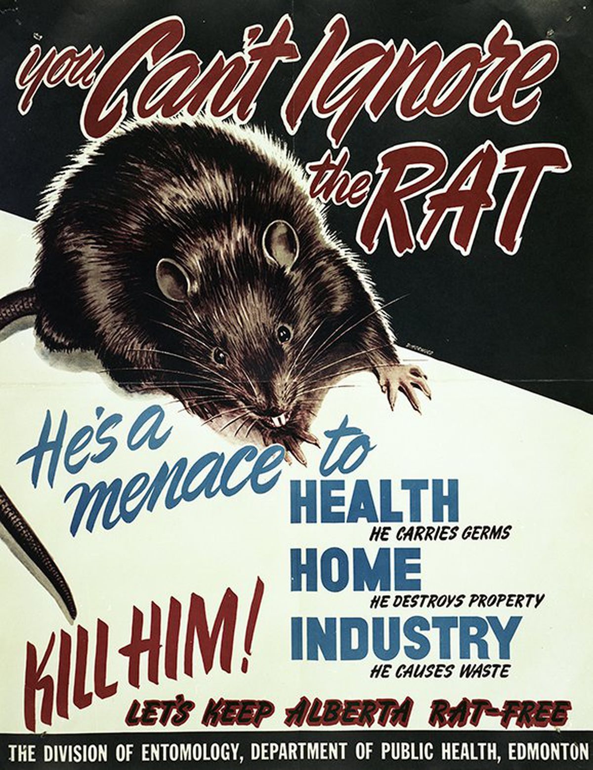 A rat awareness poster from the 1950s was part of the anti-rat public education campaign across the Canadian province of Alberta. (Courtesy Government of Alberta)