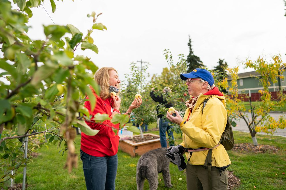Caroline Blair, left, and Stephanie Kesler taste apples at the Government Hill Commons orchard on Wednesday, Sept. 16, 2020. (Loren Holmes / ADN)