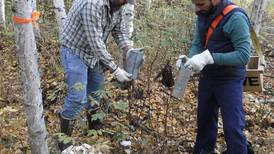 Scientists set traps north of Fairbanks to catch clues about mysterious Alaskapox virus
