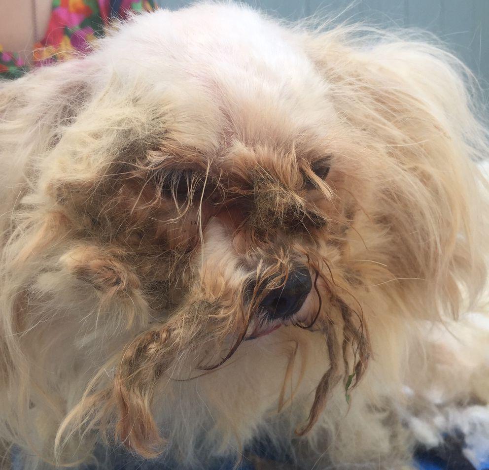 Anchorage Dog Rescue
