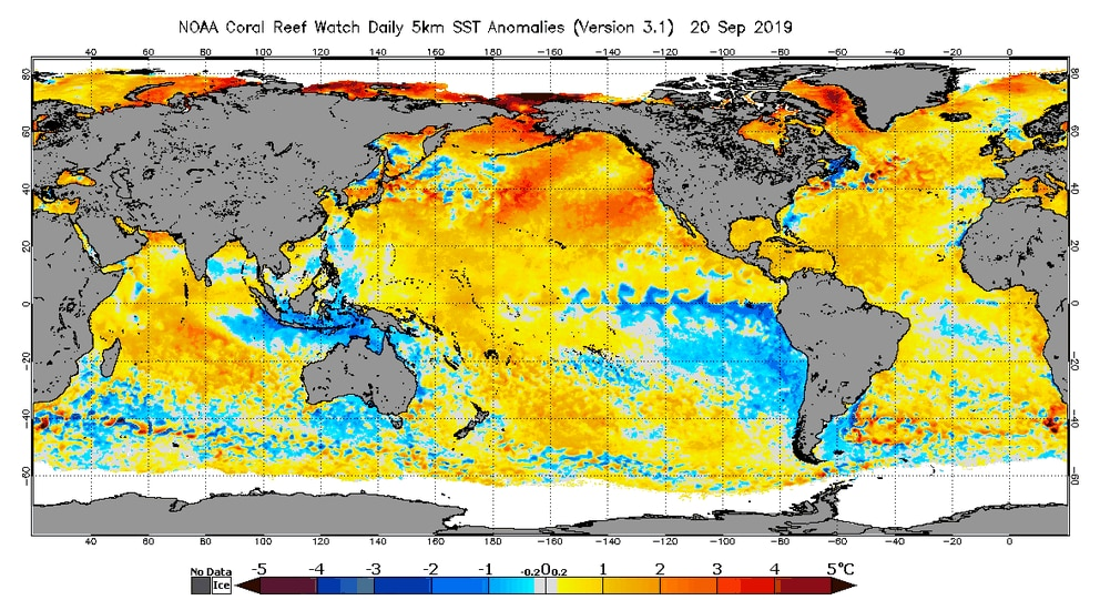 Global sea surface temperature anomalies for Sept. 20, 2019. (NOAA Coral Reef Watch)